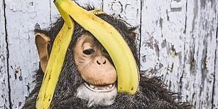 Maymunların Bir Bildiği Var! İşte Tadıyla Kokusuyla Şifa Kaynağı Olan Muzun Faydaları