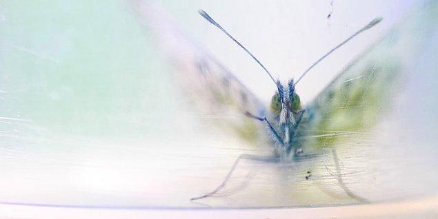 19. Plastik kavanozda bir kelebek.