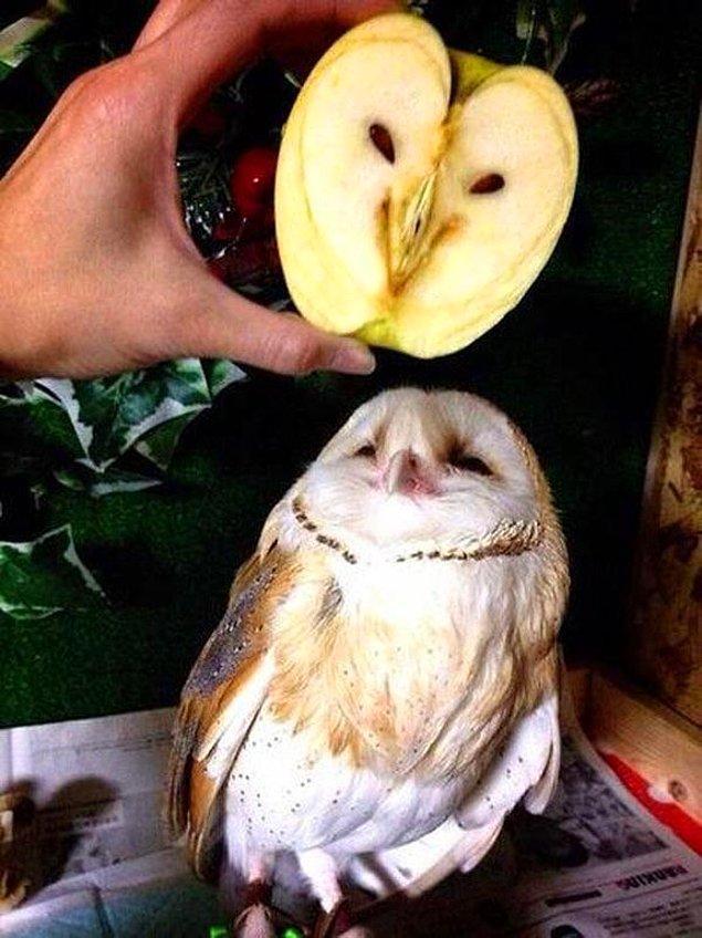 12. İkiziyle fotoğraf çektiren elma