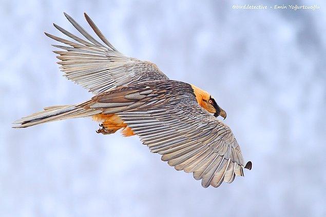 Emin, Türkiye'de en çok kuş türü görme rekorunu elinde bulunduran yaban hayat araştırmacısı aynı zamanda.