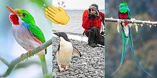 Bu Şahane Adamı Tanımalısınız: Rengarenk Kuşların Peşindeki Türk Araştırmacıdan Muazzam İşler!