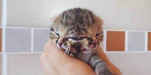İki Tane Yüzle Doğan Sevimli Kedi Bettie Bee ile Tanışın!