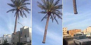 Kameralara Kaydedilmiş Açıklanamayan Doğaüstü Olaylarda Bugün: Uçan Ağaç