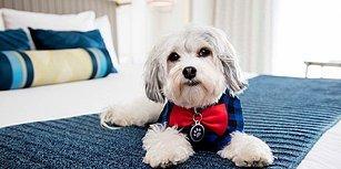 Misafirlerine Gerçek Köpek Öpücükleri Sunan Hotel Nikko'nun Sevimli Maskotu Buster ile Tanışın!