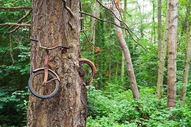 21. Bir ağaç ve gençliğinden kalma bisikleti!?