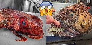 Denizin Derinliklerinde Gizlenen Korkunç Yaratıkları Fotoğraflayan Rus Balıkçı