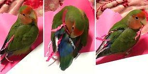 Kağıttan Kendine Kuyruk Yapan Dünyalar Tatlısı Papağan