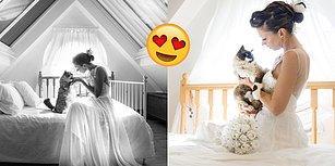 Düğünlerden Sonra Kadrajına Kedileri de Dahil Eden Fotoğrafçının Ortaya Çıkardığı Bu Kareleri Mutlaka Görmelisin!