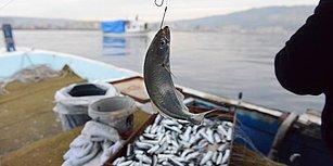 Tekneler İskelede, Balıkçılar Kahvehanede: 'Akdeniz ve Karadeniz'de Balıkların Yüzde 50'den Fazlası Tükendi'