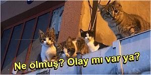 Kedilerin, Ponçiklik Zirvesini Kimseye Kaptırmayacağını Kanıtlayan 17 Komik Paylaşım