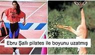 Bıkmadan Devam Ediyor! Photoshop'u Abartan Ebru Şallı Boyunu 2 Metre Yaptı, Herkesin Diline Düştü!