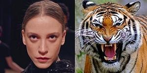 Drama Dolu Dizilerimizi Belgesellere Uyarladık! En Yırtıcı Yanları ile Vahşi Hayvanları Aratmayan Dizi Karakterleri