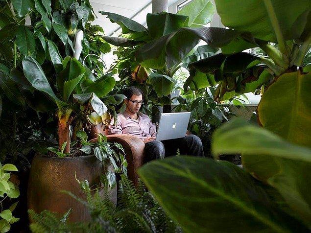 Toplantının temasına farklı yerlerde toplantılar organize edebilirsiniz. Örneğin 100 bitki bulunduran bu ormanın içi!