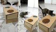Ön Ayakları Olmayan Kedisi İçin Mama ve Su Kabı Yapan Adamın Heyecandan Kendinden Geçtiği Anlar