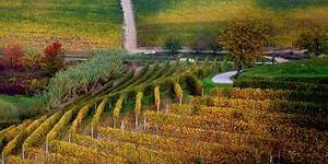 Üzüm Bağının Dünyanın En Güzel Manzaralarından Biri Olduğunun Kanıtı 26 Fotoğraf