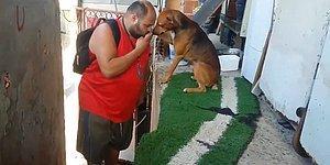 İşten Eve Gelişinde İnsan Dostunu Bir Baba Şefkatiyle Karşılayan Köpek