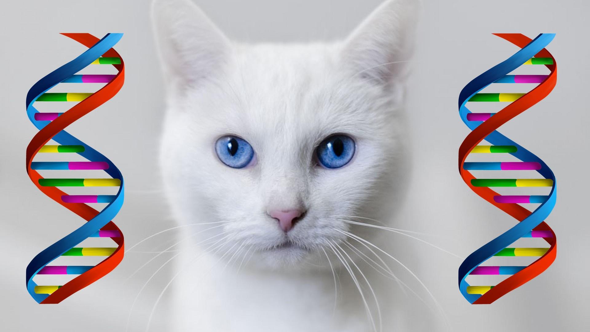 Bir kedi için pirelerden çok iyi düşüyor musun