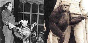 100 Yıl Önce ABD Laboratuvarlarında Doğduğu ve Öldürüldüğü İddia Edilen İnsan-Şempanze Melezi: Humanzee!