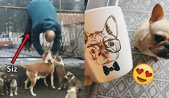 Köpekleri Çılgınca Seven İnsanlardansanız Kesinlikle Sahip Olduğunuz 20 Özellik