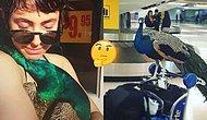 Bir Duygusal Destek Hayvanı Olan Tavus Kuşu Dexter, Uçağa Alınmayınca Tartışmalara Yol Açtı