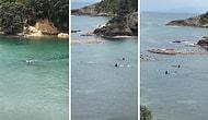 Yüzerken Yanı Başlarından Katil Balinalar Geçen Çocukların Korku Dolu Anları
