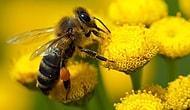 Haydi Doğaya Yardım Edelim! Arıların, Yani Doğal Olarak Dünya Kurtuluşu İçin Bir Saksı Çiçek