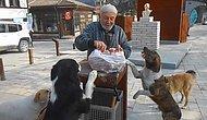 Sokak Hayvanlarını Her gün, Aynı Yerde ve Aynı Saatte Besliyordu: Sakarya Ulvi Amca'sız Kaldı...
