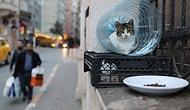 Sonsuz Karmaşa İçindeki Sevimli Hayatlar! Reuters İstanbul'un Sokak Kedilerini Fotoğrafladı 🐱