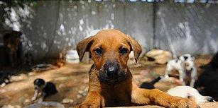 En Güzel 14 Şubat Önerisi: 'Bu Yıl Sevgililer Günü Bütçenizi Sokak Hayvanları için Harcayın'