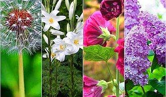 Sevgililer Günü'ne Özel İlginç Bir Aktivite: Gerçek Çiçek Yemekler!