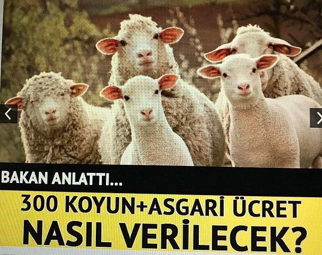 2. Koyunlar da nasıl olacağını merakla bekliyorlar gibi