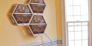Dekoratif Yuvalarla Oturma Odanızda Bal Üretmek İster misiniz?