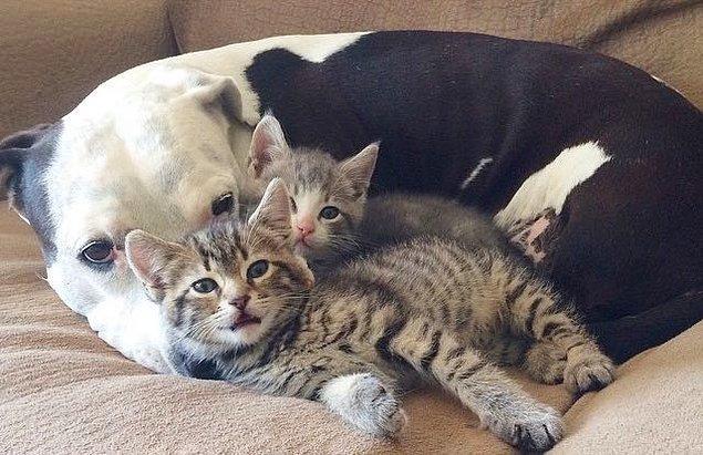 2. Ya da kedileri sevmeyen bir canavar...
