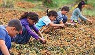 Duydunuz mu? 2018 Yılı 'Çocuk İşçiliği ile Mücadele Yılı' İlan Edildi