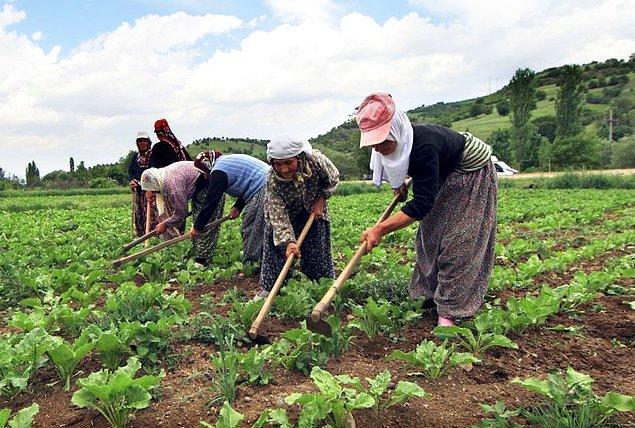Zümran Hanım'ın hikayesine başlamadan önce Türkiye dahil dünya genelinde kadınların tarıma ve üretime olan paylarından söz edelim.