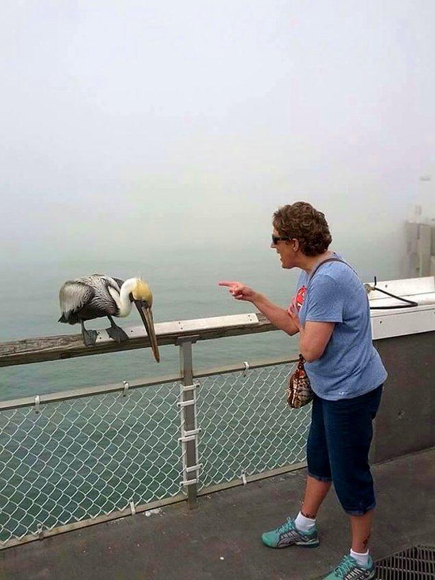 5. Kendisini ısıran pelikanı bile azarlıyor. Büyük anne işte! 😅