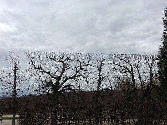Bu ağaçlar da haritanın maksimum mesafesine ulaştıkları için daha yukarısı görünmüyor.