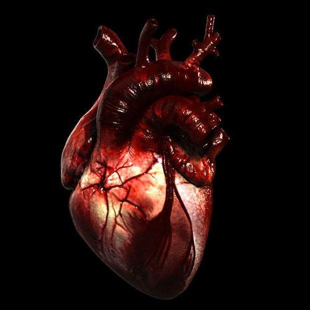 Kas, damar ve bir takım dokulardan tabi ki...