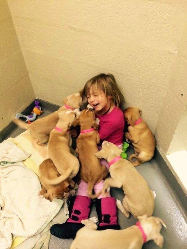 """8. """"Kızım bizim yerel barınakta yavru köpekleri beslemek için gönüllü çalışıyor, bugün ise fazla saldırıya maruz kaldı."""""""