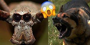 Korktuğun Hayvanlara Göre Seni Sana Anlatıyoruz!