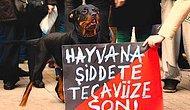 Her Gün Yeni Bir Rezillik... Tarsus'ta Bir Sapık Köpeğe Tecavüz Ederken Yakalandı