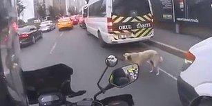 Yolun Karşısına Geçmeye Çalışan Köpek İçin Trafiği Durduran Güzel İnsan