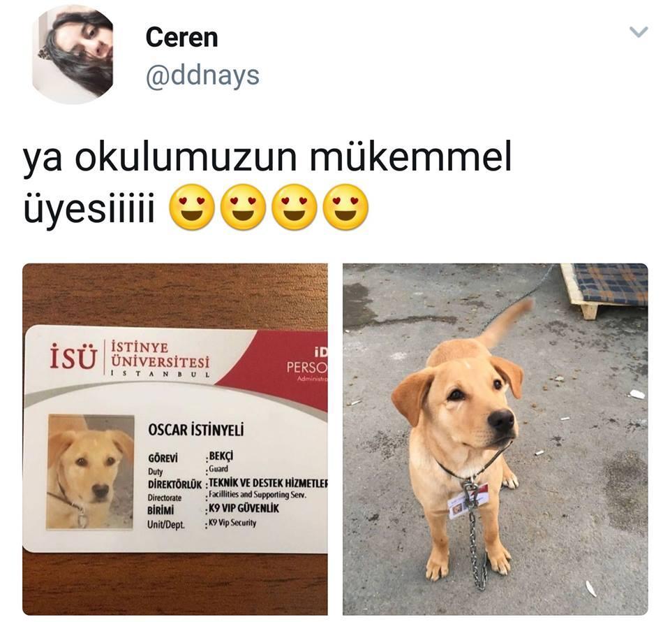 İDO Yine Köpek Öldürdü