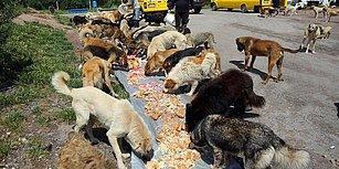 Siz Ne Güzel İnsanlarsınız! Sahipsiz Sokak Hayvanları İçin Aşevi: Ölü Adam