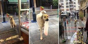 Kasabın Önünde Bekleyip Etini Aldıktan Sonra Evinin Yolunu Tutan Koca Yürekli Köpek