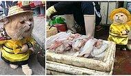Dünyanın En Minnoş Esnafı! Vietnam'ın Balık Satan Kedisi Görenleri Hayran Bırakıyor 😻