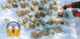 Böyle Manyaklık Korku Filmlerinde Yok! Sibirya'da Bulunan, İçinden 54 İnsan Eli Çıkan Esrarengiz Çanta