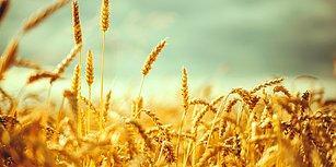 Uzmanlar 2017'ye Tarımda İthalatın 'Altın Yılı' Demişti: Hangi Ürün Ne Kadar İthal Ediliyor?
