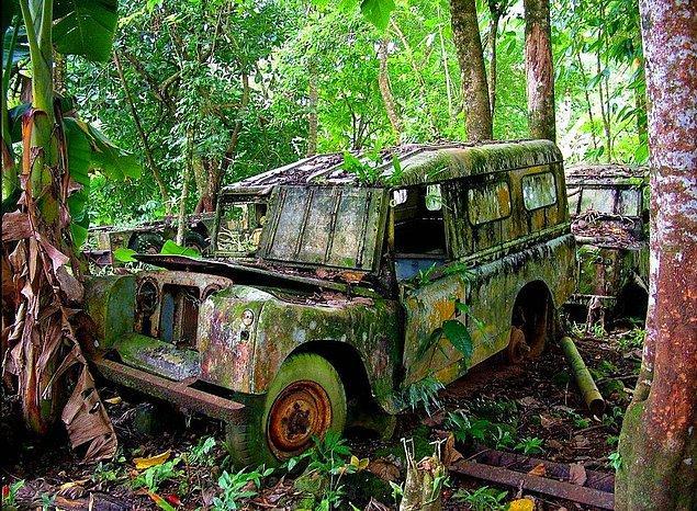 10. Panamanian Cangılında takılı kalmış bir arazi aracı.