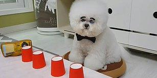 İçinde Ödül Maması Olunca Bardak Oyununda Harikalar Yaratan Minnoş Köpek